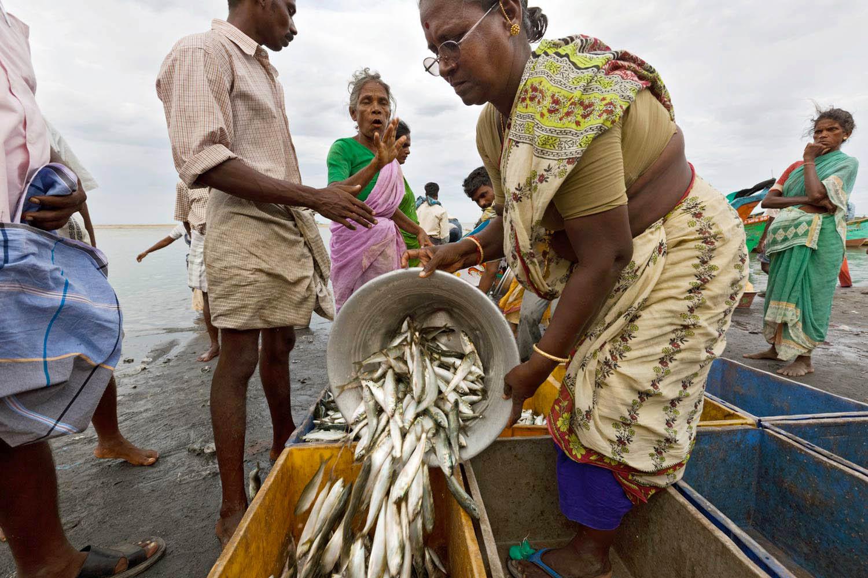 Indien- Mikrokredit- Hilfsprojekt